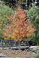 Green Spring Gardens in November (22170322293).jpg