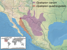 Gyalopion sp. distribution.png