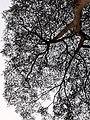 HK CWB 銅鑼灣 Causeway Bay 摩頓台 Moreton Terrace tree April 2021 SS2 01.jpg
