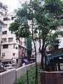 HK SW 上環 Sheung Wan 李陞街遊樂場 Li Sing Street Playground August 2019 SSG 06.jpg