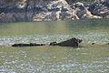 HMS Port Napier wreck 7.jpg