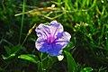 HUMBLE FLOWER (6923226728).jpg