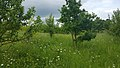 Habitat alongside the A10 in Hertfordshire (41937305145).jpg