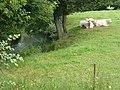 Hannappes (Ardennes) l'Aube, affluent du Thon.jpg