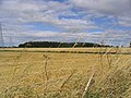 Harvest fields - geograph.org.uk - 547448.jpg