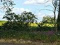 Hathern Drive - geograph.org.uk - 1338389.jpg
