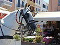 Head of carriage horse in Chania, Creta 10.jpg
