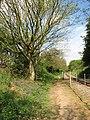 Heading towards Buxton on the Bure Valley Walk - geograph.org.uk - 1279083.jpg