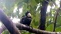 Heart spotted Woodpecker.JPG