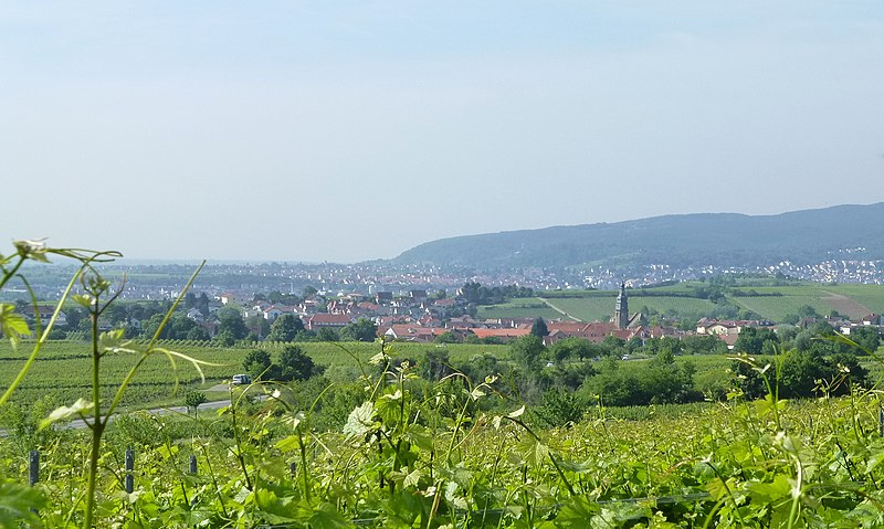 File:Herxheim am Berg vineyardsHonigsack Kallstadt 40.jpg