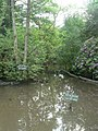 Highcliffe, Nea Lake wildlife pond - geograph.org.uk - 824196.jpg