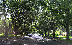 Tree-lined street in Highland Park