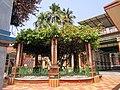 Holy tree inside Uddharan Dutta's Sripat in Saptagram.jpg