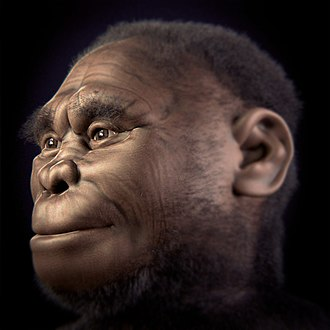 Homo floresiensis - Reconstruction of female Homo floresiensis based on LB-1