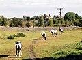Horse field, Fryston - geograph.org.uk - 558542.jpg