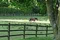 Horse paddock in Chaddleworth, Berkshire, England.jpg
