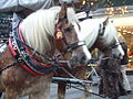 Horses pulling a carriage at the Christmas Market.jpg