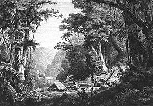 Hugh Algernon Weddell - Vallée de San Juan del Oro by J. Denis in Histoire naturelle des quinquinas