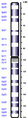 Human chromosome 03 from Hemabase database.png