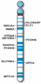 Human chromosome 13 with ASD genes from IJMS-16-06464.png