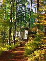 Hut In The Forest - panoramio.jpg