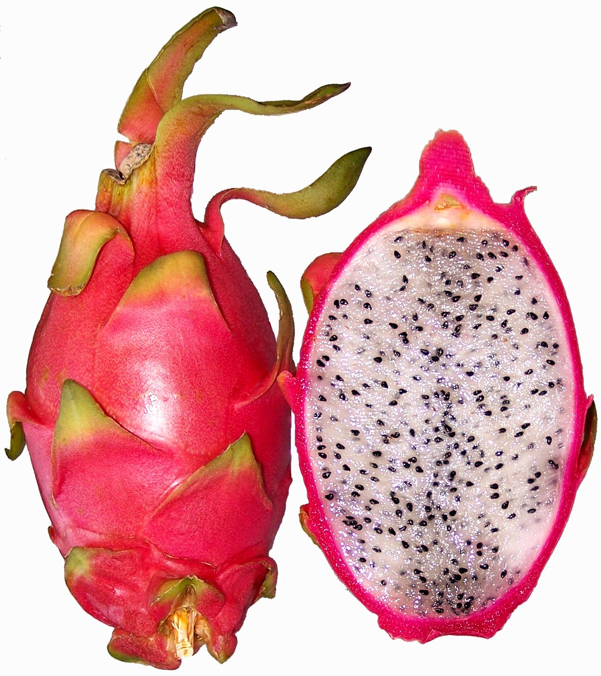 Dragonfruit Simple English Wikipedia The Free Encyclopedia
