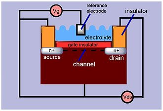 ISFET - The schematic view of an ISFET. Source and drain are the two electrodes used in a FET system. The electron flow takes place in a channel between the drain and source. The gate potential controls the flow of current between the two electrodes.