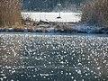 Iller Januar 2009 - panoramio.jpg