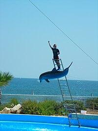 Image-Mediterraneo dolphin show 2.jpg