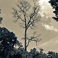 Image naturetree.jpg