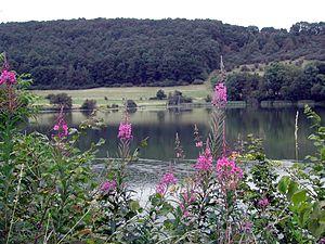 Immerath, Rhineland-Palatinate - Immerather Maar