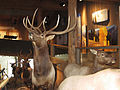 Jackson Hole Visitor Center interior.jpg