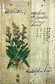 Japanese herbal, 17th century Wellcome L0030035.jpg