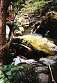 Japanese water garden with carp.jpg