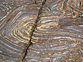 Jaspilite banded iron formation (Soudan Iron-Formation, Neoarchean, ~2.69 Ga; Stuntz Bay Road outcrop, Soudan Underground State Park, Soudan, Minnesota, USA) 11 (19198900056).jpg