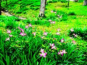 Jerry Clegg gardens