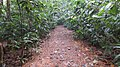 Jungle Walking Path, La Mesa Ecopark - panoramio.jpg