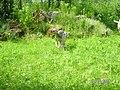 Jurapark Baltow, Poland (www.juraparkbaltow.pl) - (Bałtów, Polska) - panoramio (30).jpg