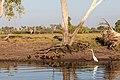 Kakadu (AU), Kakadu National Park, Yellow Water -- 2019 -- 3802.jpg