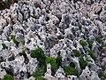 Kamienny brzeg kampingu Cikat na wyspie Losinj - Stone on shore autocamp Cikat on Losinj island - panoramio.jpg