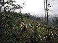 Karpacz szlak na sniezke - panoramio.jpg