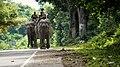 Kaziranga Forest Rangers Riding on two Elephants on the NH-47 Kaziranga highway.jpg