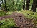 Kepler Track, New Zealand (79).JPG