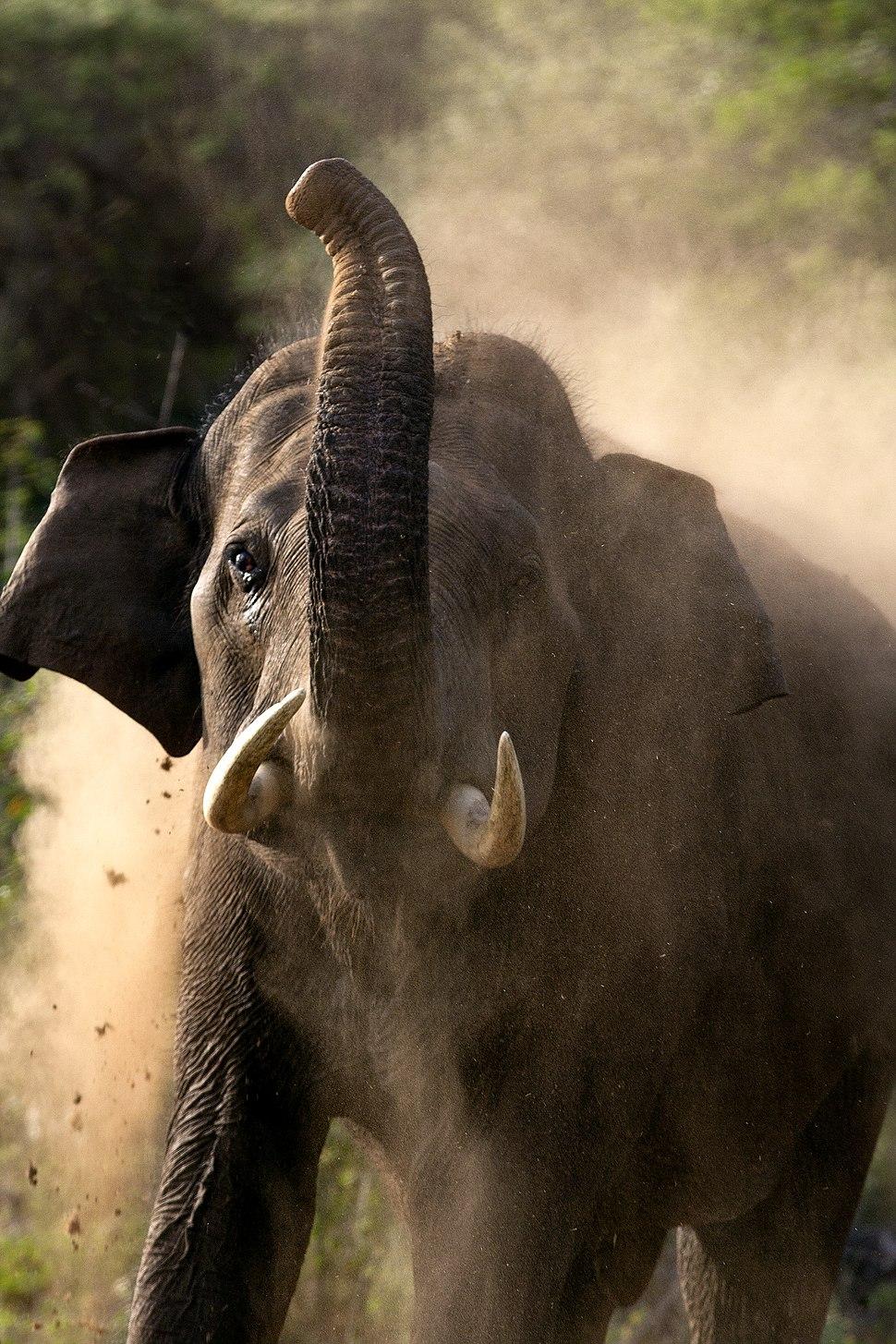 Kerala Elephant 0170 by N A Nazeer 03