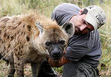 Kevin Richardson (zookeeper) - Wikipedia