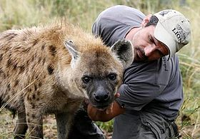 Kevin Richardson with Hyena.jpg