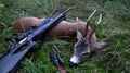 Killed roe deer buck with rifle Sweden 01.png