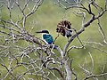 Kingfisher (32057210261).jpg