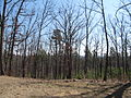 Kings Mountain National Military Park - South Carolina (8557794869) (2).jpg