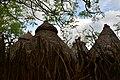 Konso village of Mecheke (18) (29078223741).jpg